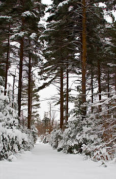 Forest Avenue by James Bullard