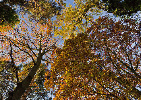 Forest Canopy by Maj Seda
