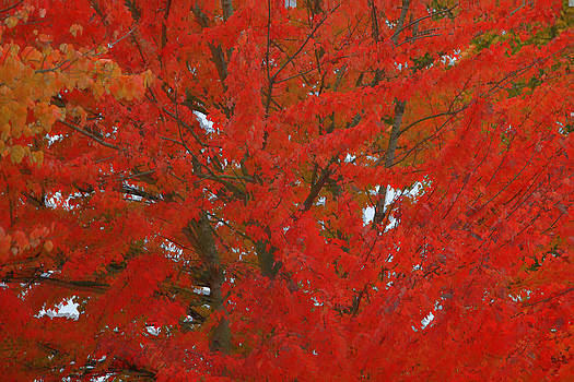 Forest Colors Of Fall by Donald Torgerson