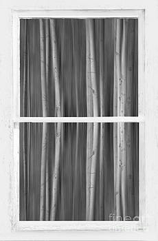 James BO  Insogna - Forest Dream Through White Rustic Distressed Window BW