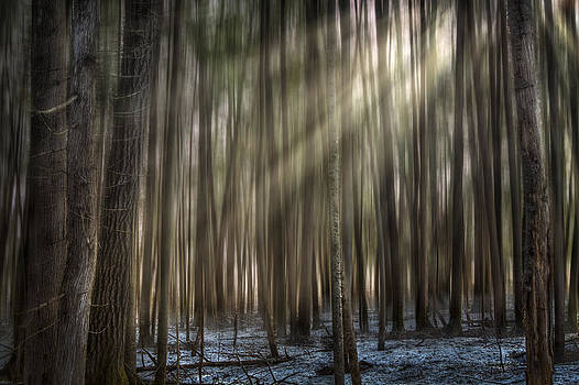 Forest Glow by Gary Smith
