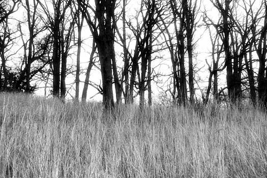 Forest by Laura Schramm-Behnke