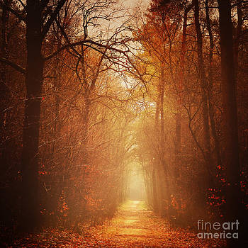 LHJB Photography - Forest Light