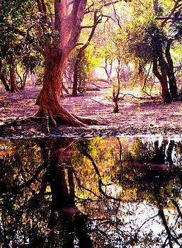 Forest Reflection by Deepti Chahar