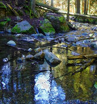 Forest reflections by Linda Hunt