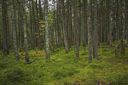 Forest by Rhys Templar