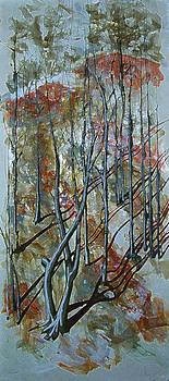 Forest Shadows by Florin Birjoveanu