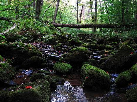 Forest Stream by Jennifer Randall