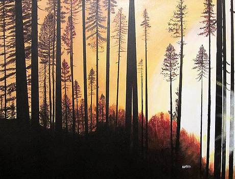 Forest Sunrise by David Bartsch