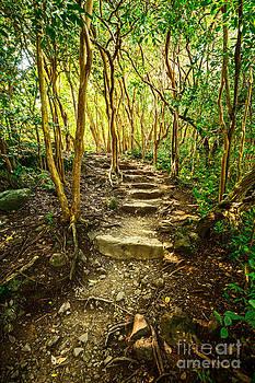 Jamie Pham - Forest Trail Glow - Pipiwai Trail in Maui.