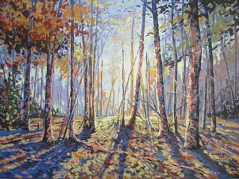 Forest Walking by Andrei Attila Mezei
