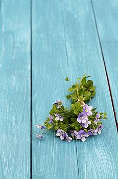 Forget me Nots by Emma Manners