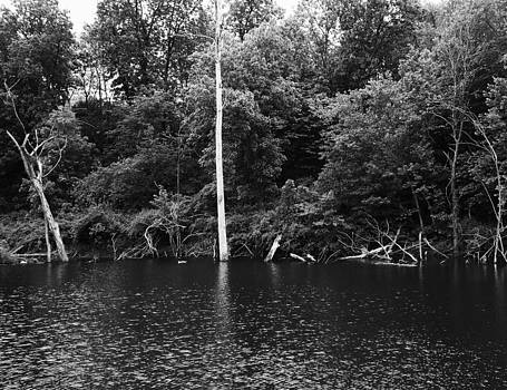 Forgotten Trees by Mark Kime