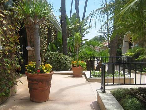 Formal Garden At Del Mar by Melissa McCrann