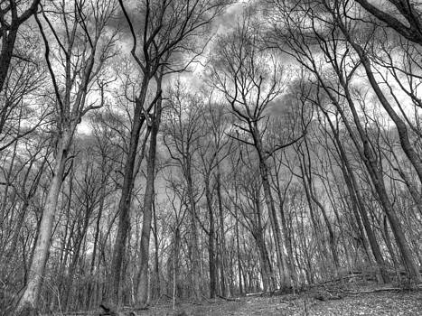 Forrest Black and White by Luis Lugo
