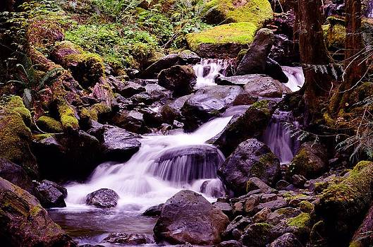 Forrest Stream by Todd Sarah Ivanhoe