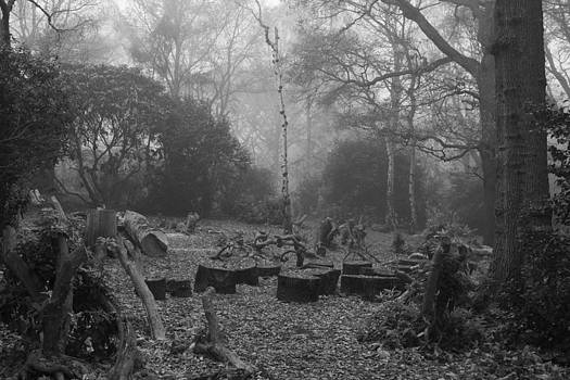 Forset Trees by Maj Seda