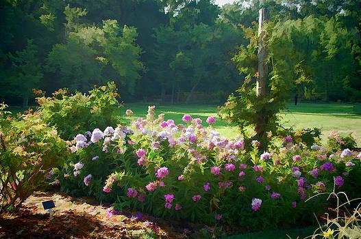 Fort Worth Botanic Garden Phlox by Janet Maloy