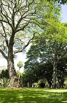 Charmian Vistaunet - Foster Botanical Garden Trees