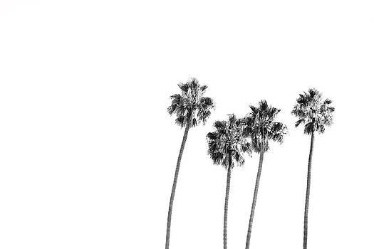 Four in Monochrome  by Mark DeJohn