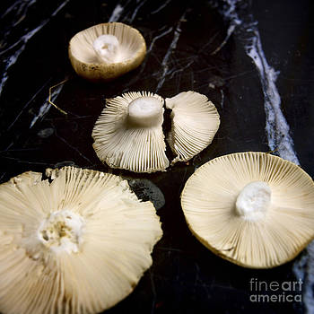 BERNARD JAUBERT - Four mushrooms upside.