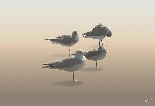Four Seagulls on Sand Key by Matthew Schwartz
