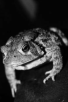 Fowler's Toad by Nichole Carpenter