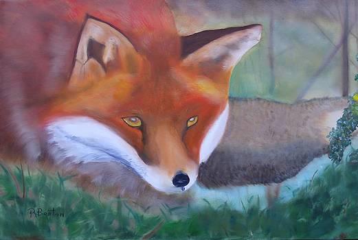 Fox by Robert Benton