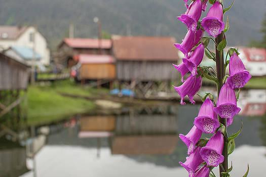 Foxgloves, Digitalis, Flowers Bloom by Erika Skogg