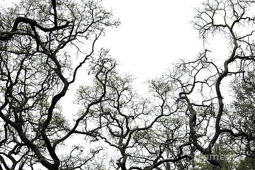 Fractal Branches by Theresa Willingham