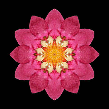 Fragaria Flower Mandala by David J Bookbinder