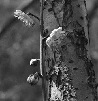 Fragility by Lena Turcan