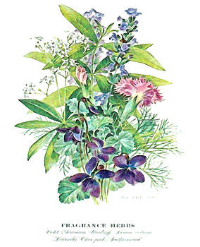 Fragrance Herbs by Wide Awake Arts
