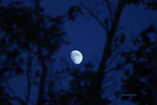 Framed moon by Edward Hamilton