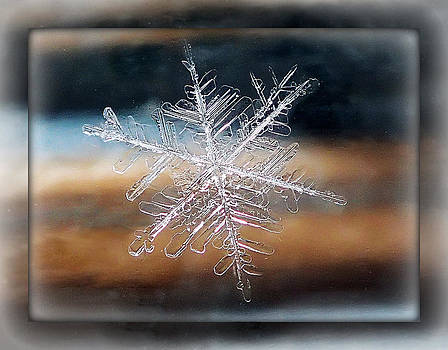 Framed Snowflake by Lorella  Schoales