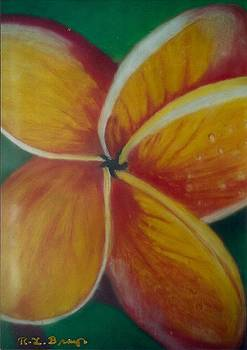 Frangipani bloom by Robert Bray