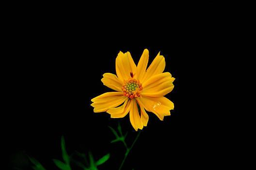 Free From Dark by B Thottoli