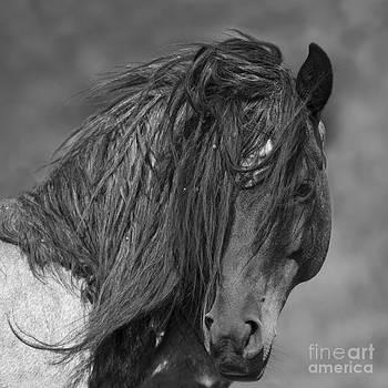 Freedom Close Up by Carol Walker