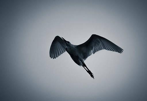 Freedom Flight by Debjyoti Ganguly