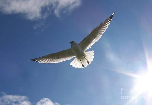 Freedom Flight by Jackie Mueller-Jones