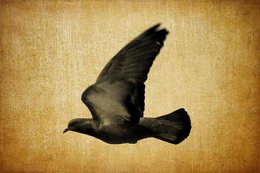 Freedom by Salman Ravish