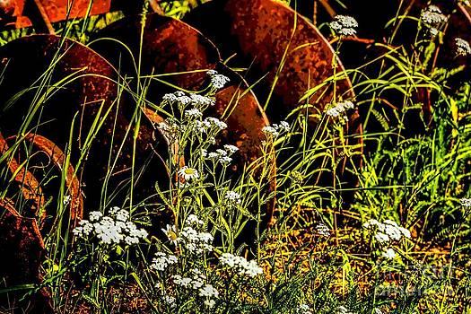 Jon Burch Photography - Fresh Flowers