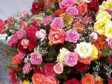 Fresh Roses by Haroon  Basha