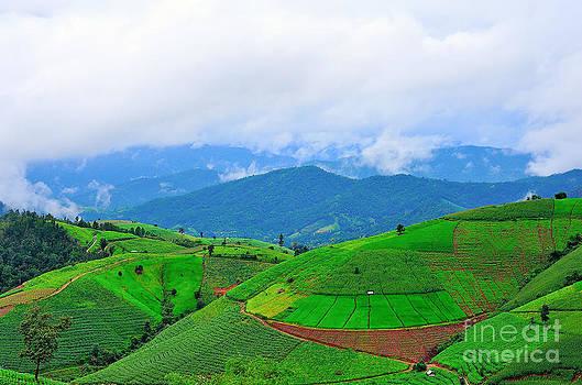 Fresh terrace rice field over the mountain range and beautiful s by Keerati Preechanugoon