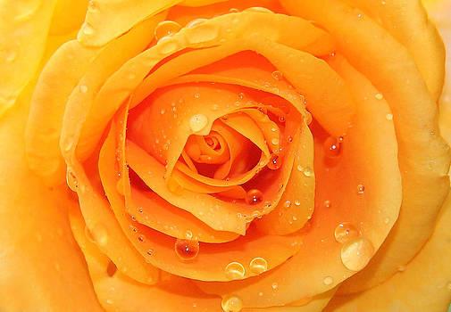 Fresh Yellow  by Mark Ashkenazi