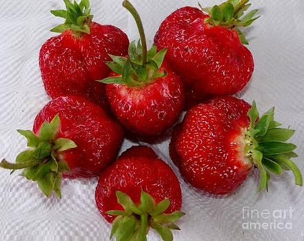 Gail Matthews - Freshly Picked Strawberries