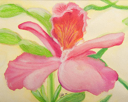 Frilly Orchid by Anne Kibbe