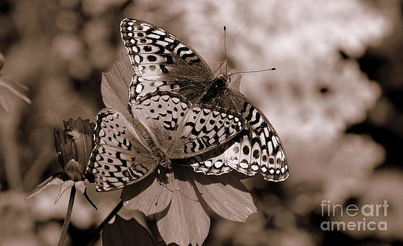 Fritillary Butterflies in Sepia by Jaunine Roberts