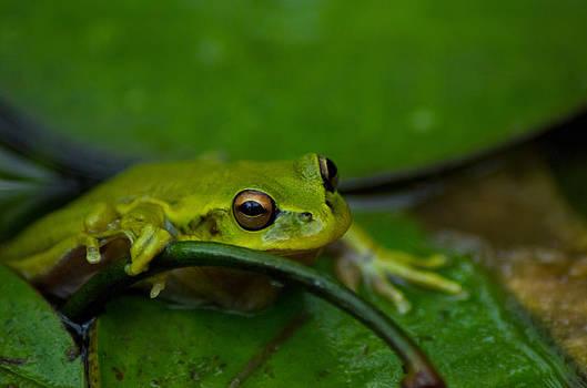 Froggy by Alejandro Tejada