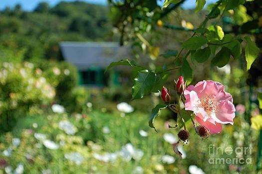 From Monets Garden 2 by Katerina Vodrazkova